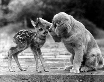 perrito con bambi chiquito.jpg